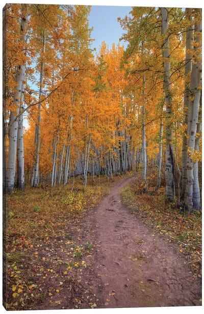 Pathway To Wonder Canvas Art Print