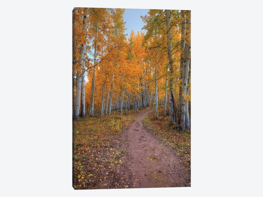 Pathway To Wonder by Bill Sherrell 1-piece Canvas Print