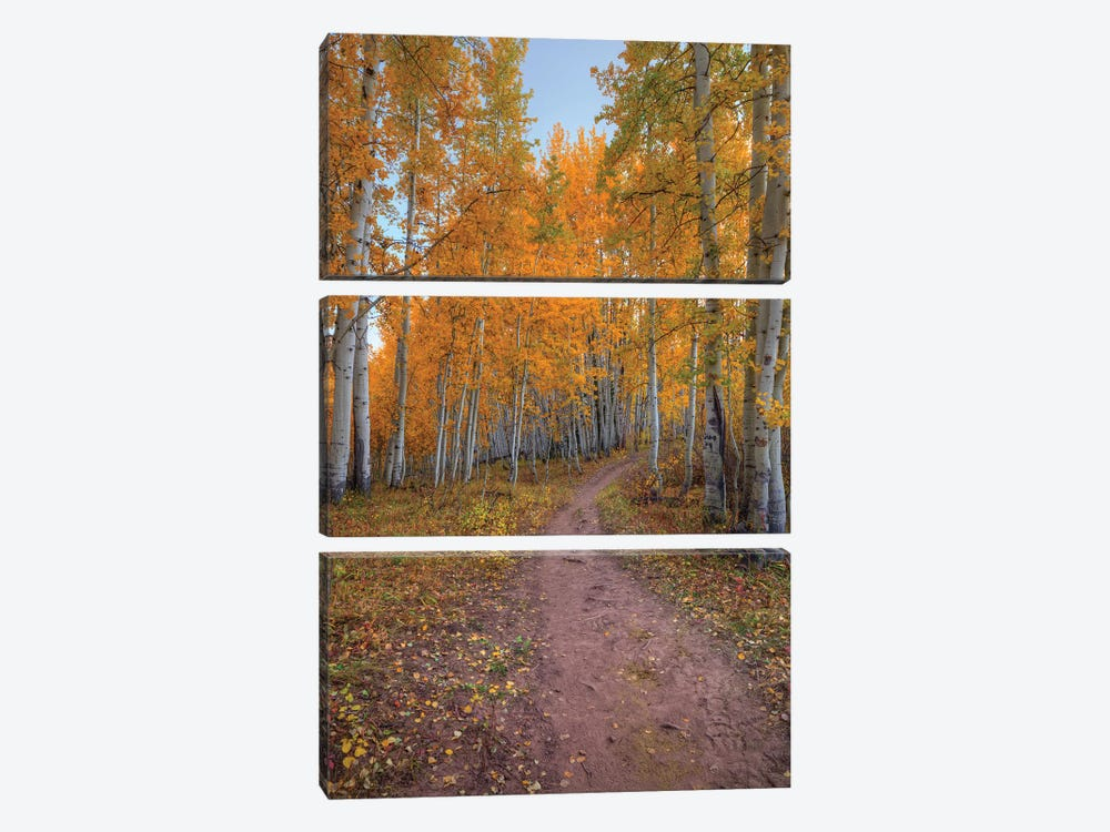 Pathway To Wonder by Bill Sherrell 3-piece Canvas Art Print