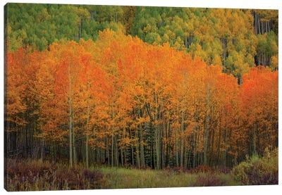 The Orange Flames Of Autumn Canvas Art Print