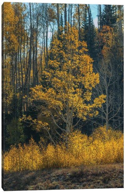 Tree Of Fire Canvas Art Print