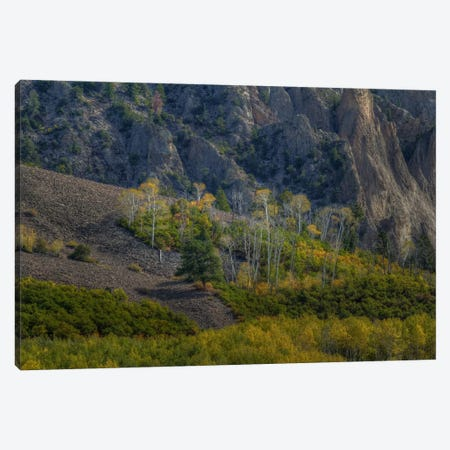 Aspen Sprites Canvas Print #SHL32} by Bill Sherrell Art Print
