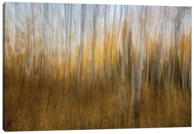 Autumn Forest Dream Canvas Art Print