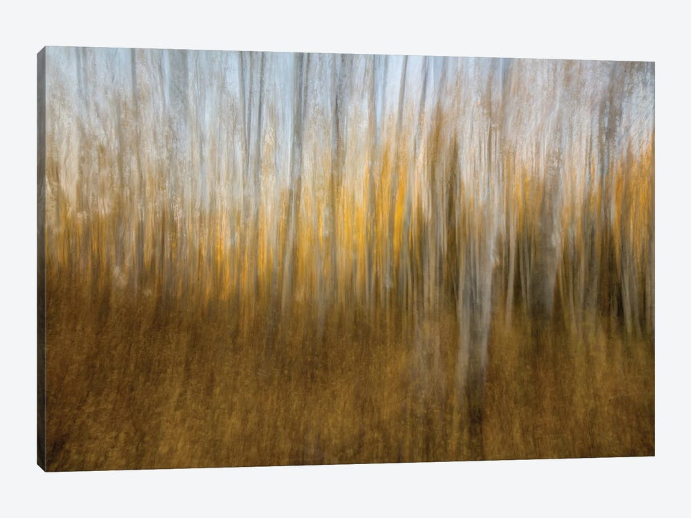 Autumn Forest Dream by Bill Sherrell 1-piece Art Print