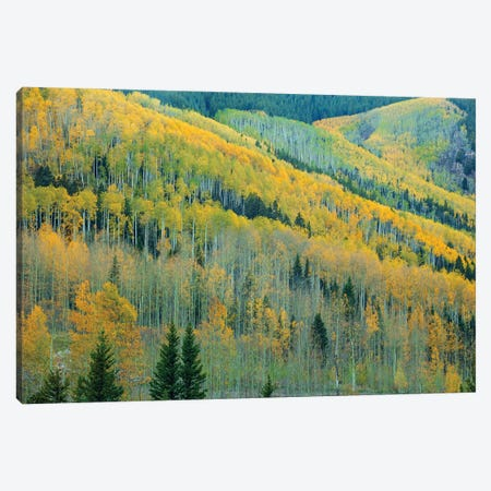 Aspen Escalators Canvas Print #SHL341} by Bill Sherrell Canvas Artwork