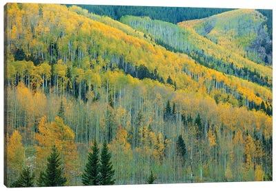 Aspen Escalators Canvas Art Print