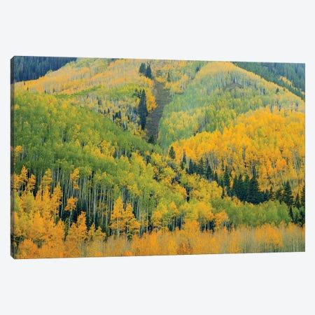 Kaleidoscope Autumn Canvas Print #SHL348} by Bill Sherrell Canvas Artwork