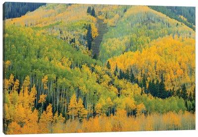 Kaleidoscope Autumn Canvas Art Print