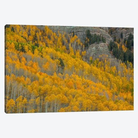 Autumn Canyon Canvas Print #SHL40} by Bill Sherrell Canvas Art