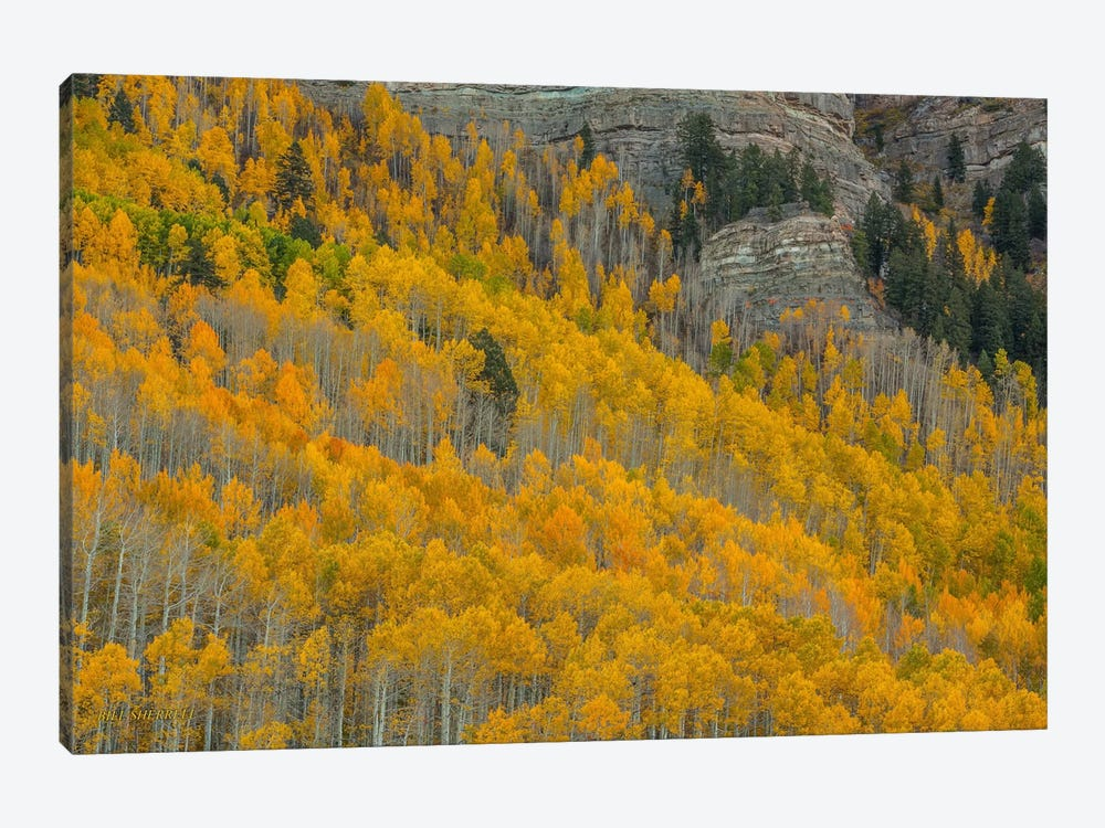 Autumn Canyon by Bill Sherrell 1-piece Canvas Art Print