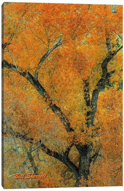 Autumn Contrast Canvas Art Print