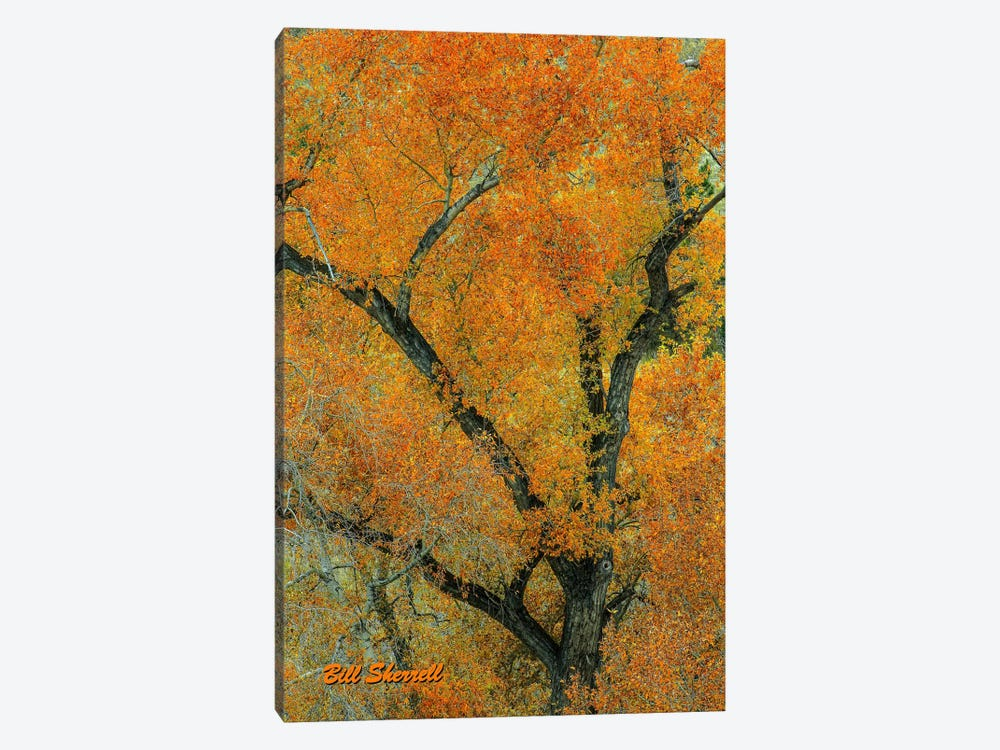 Autumn Contrast by Bill Sherrell 1-piece Canvas Art