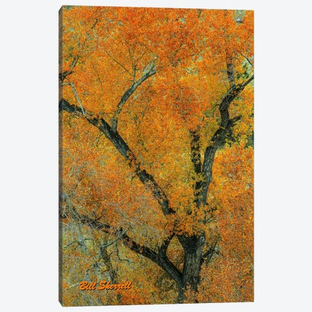 Autumn Contrast Canvas Print #SHL41} by Bill Sherrell Canvas Wall Art