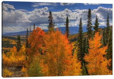 Autumn Fire At Ohio Pass Canvas Art Print