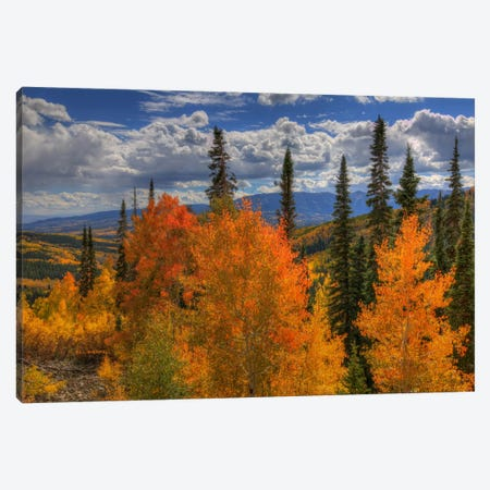 Autumn Fire At Ohio Pass Canvas Print #SHL43} by Bill Sherrell Canvas Artwork