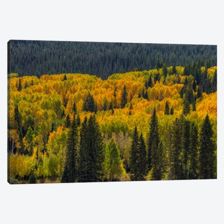 Autumn Flames Canvas Print #SHL44} by Bill Sherrell Art Print