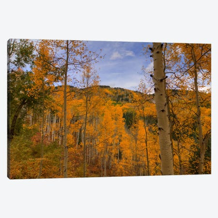 Autumn Flames At Ohio Pass Canvas Print #SHL45} by Bill Sherrell Canvas Print