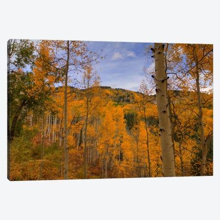 Autumn Flames At Ohio Pass Canvas Print #SHL45} by Bill Sherrell Canvas Print
