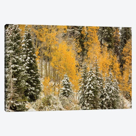 Autumn Wonderland At Rabbit Ears Pass Canvas Print #SHL63} by Bill Sherrell Canvas Art