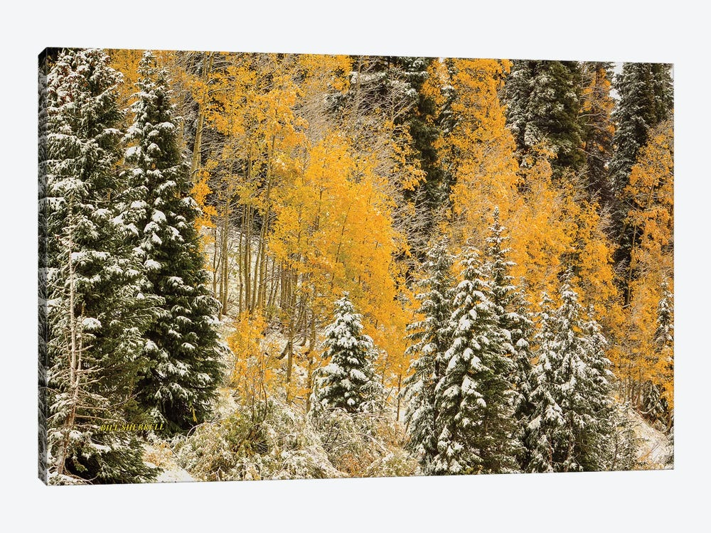 Autumn Wonderland At Rabbit Ears Pass by Bill Sherrell 1-piece Canvas Artwork
