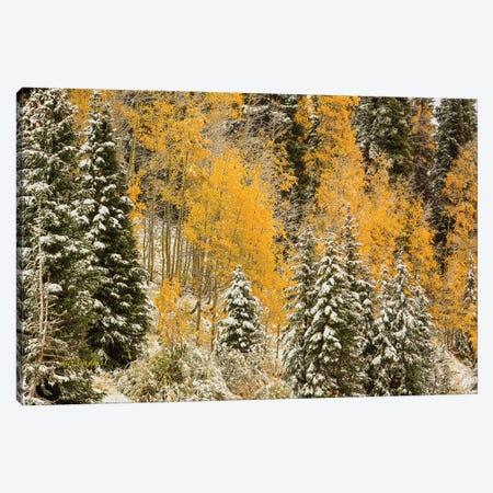 Autumn Wonderland At Rabbit Ears Pass Canvas Print #SHL63} by Bill Sherrell Canvas Art