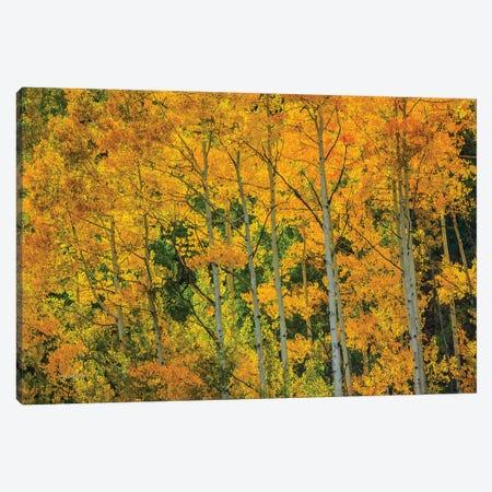 Backlit Embrace Canvas Print #SHL64} by Bill Sherrell Canvas Art Print