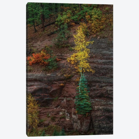 Beautiful Tenacity Canvas Print #SHL68} by Bill Sherrell Canvas Wall Art