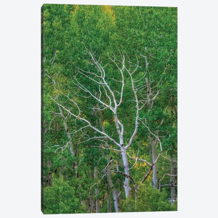 Branching Out Canvas Print #SHL71} by Bill Sherrell Canvas Print