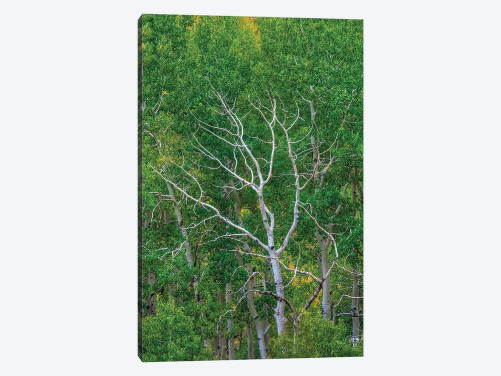 Branching Out by Bill Sherrell 1-piece Art Print