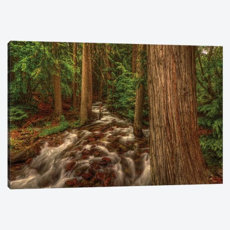 Brook Canvas Print #SHL73} by Bill Sherrell Art Print