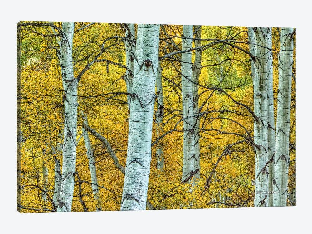 Chaotic Beauty by Bill Sherrell 1-piece Canvas Art
