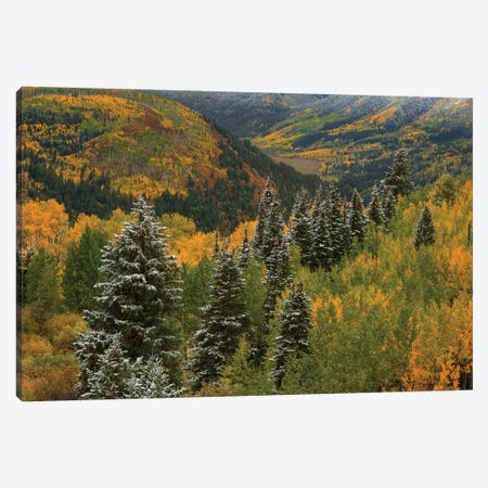 Christmas Tree Autumn Canvas Print #SHL77} by Bill Sherrell Canvas Art