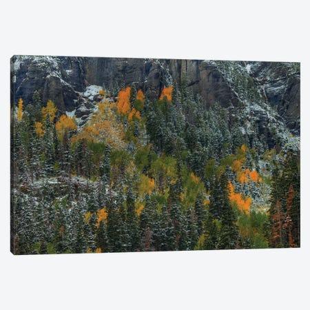 Color Splash Canvas Print #SHL84} by Bill Sherrell Canvas Art Print