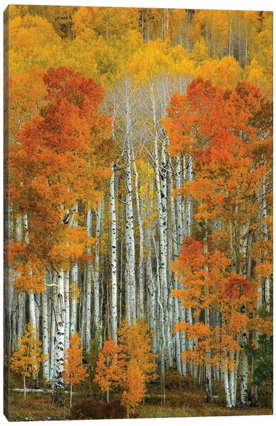 Dalmatian Autumn Canvas Art Print