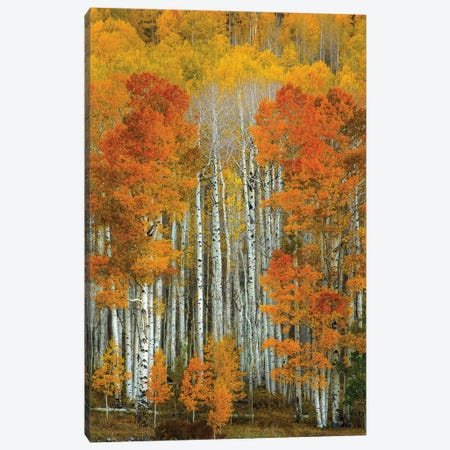 Dalmatian Autumn Canvas Print #SHL88} by Bill Sherrell Canvas Artwork