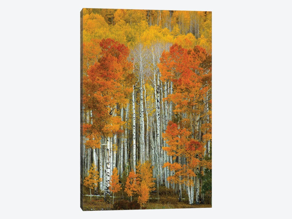 Dalmatian Autumn by Bill Sherrell 1-piece Canvas Art Print