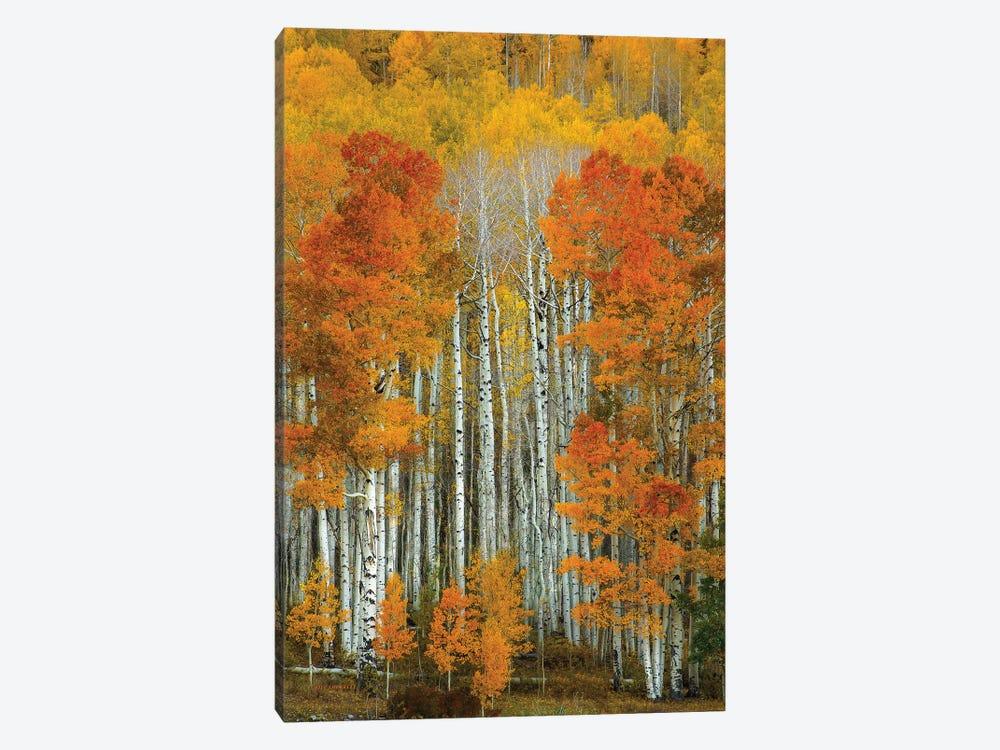 Dalmatian Autumn by Bill Sherrell 1-piece Canvas Art Print