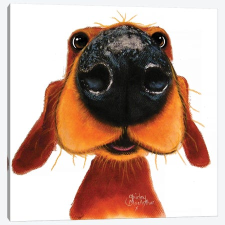 Nosey Nando Canvas Print #SHM42} by Shirley Macarthur Art Print