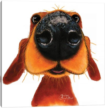 Nosey Nando Canvas Art Print