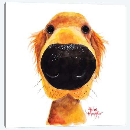 Roy The Retriever Canvas Print #SHM51} by Shirley Macarthur Canvas Wall Art
