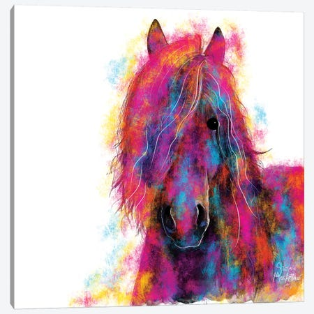 Friesian Wild Canvas Print #SHM85} by Shirley Macarthur Canvas Art