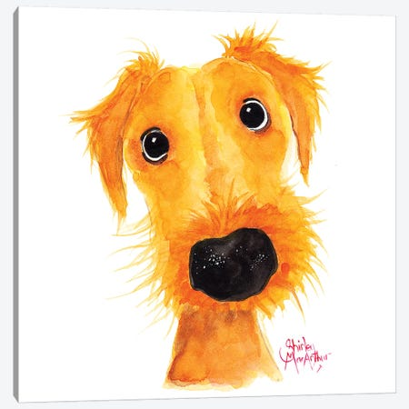 Jacksonville Muttley Canvas Print #SHM90} by Shirley Macarthur Canvas Art