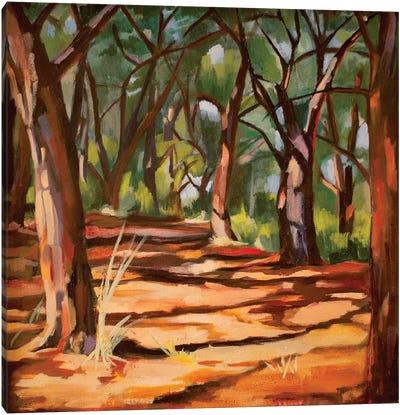 Cape Cod Woods Canvas Art Print