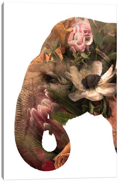 Floral Eelephant Canvas Art Print