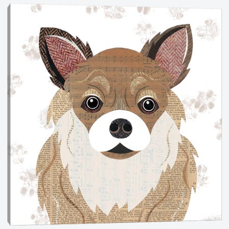Long Haired Chihuahua Canvas Print #SIH105} by Simon Hart Canvas Artwork