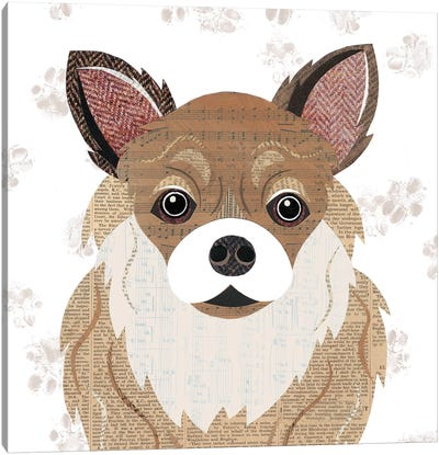 Long Haired Chihuahua Canvas Art Print