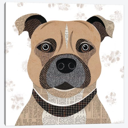 Staffie Canvas Print #SIH133} by Simon Hart Canvas Wall Art