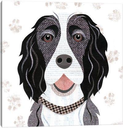 Black White Springer Spaniel Canvas Art Print