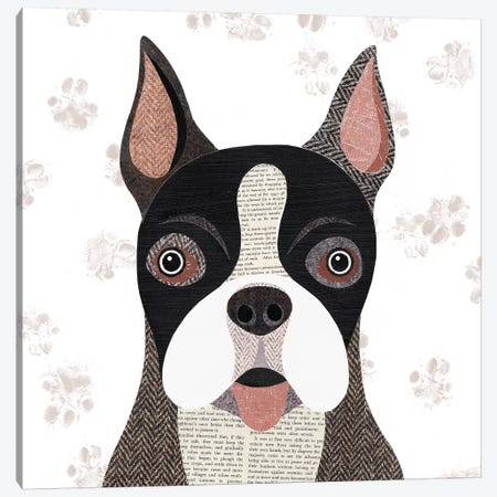Boston Terrier Canvas Print #SIH43} by Simon Hart Art Print