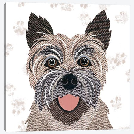 Cairn Terrier Canvas Print #SIH51} by Simon Hart Canvas Artwork